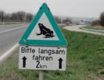 国道沿いに春だけ出る「カエル注意」の標識