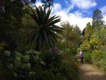 ヒマラヤから来た花の木々 美しい庭の歴史(1)