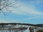 オーストリアの冬 モノクロのぶどう畑