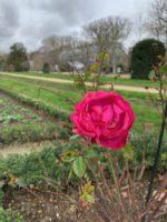 パリの植物園は王様の薬草園だった!